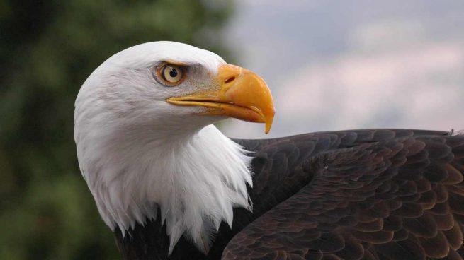 Águilas en España