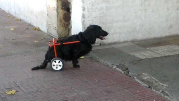 Ortopedia en perros