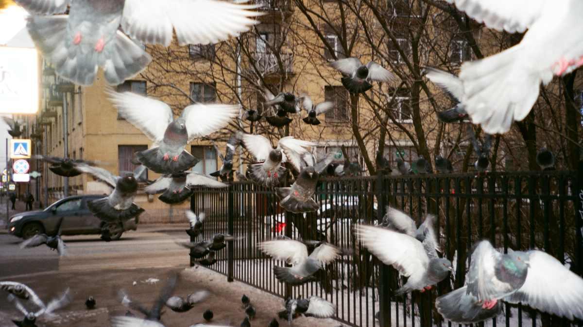 Ayuda a las aves urbanas