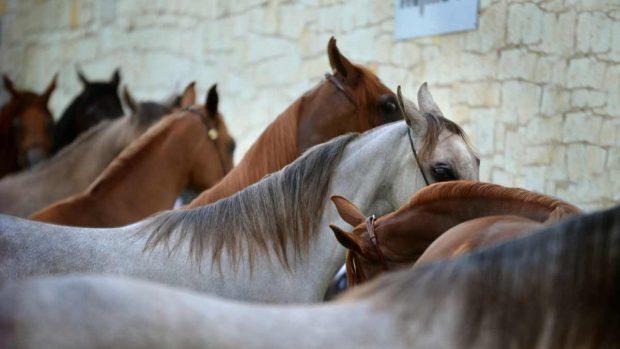 Mantenimiento caballo