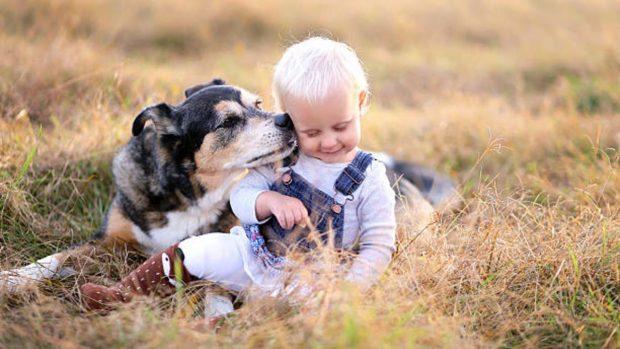 razas perros niños pequeños