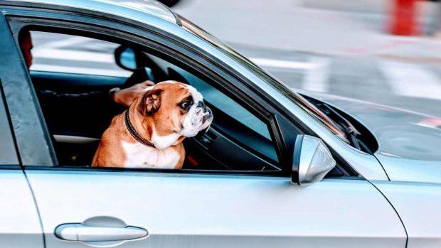 Perro en el coche, accesorios