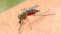 El mosquito que contagia el Virus del Nilo se expande por Andalucía y ya está en estos 12 municipios.