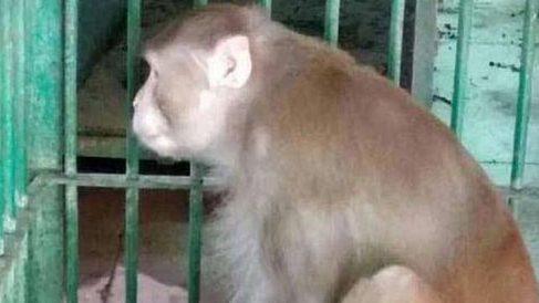 Mono condenado a cadena perpetua