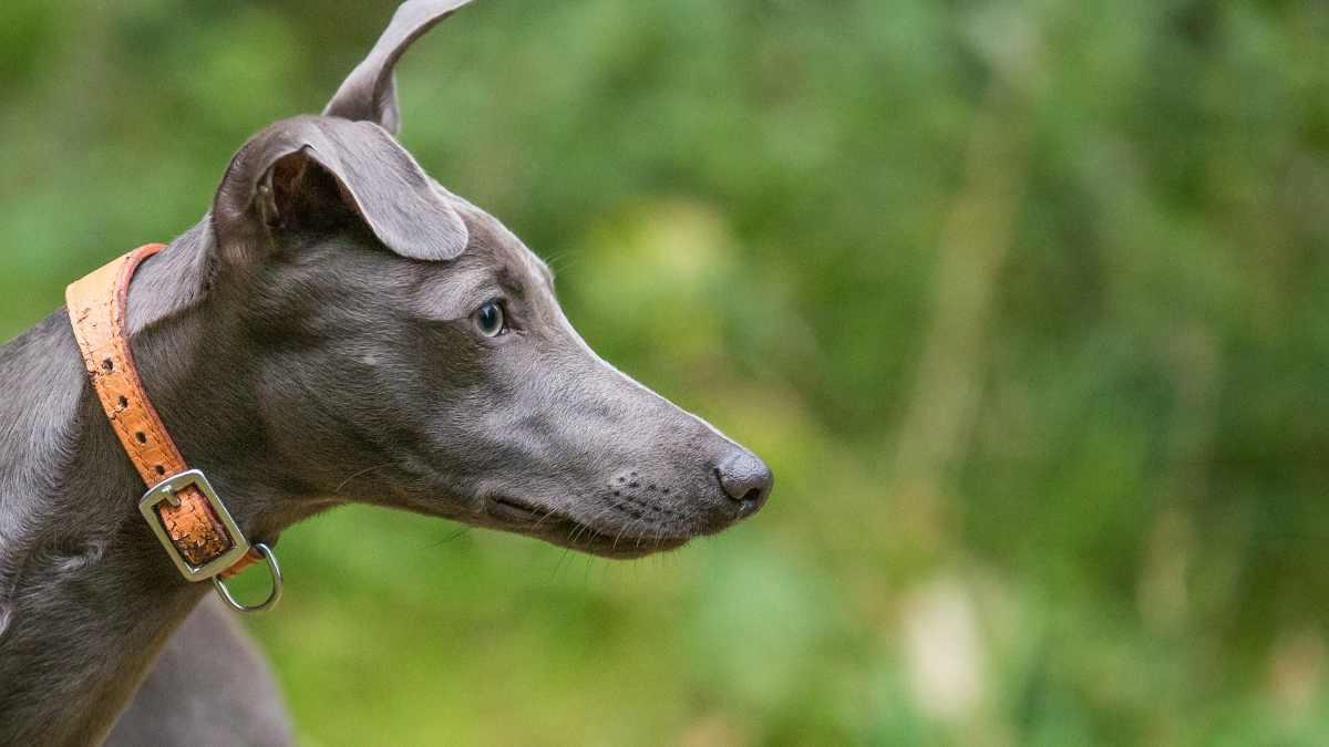 ¿Cómo elegir un perro de caza?