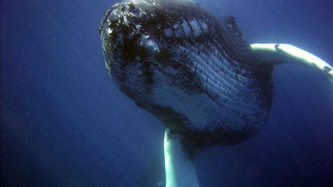 Ballena de mayor tamaño