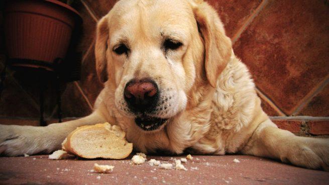 Alimentos mascotas