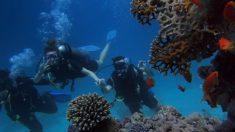 Verano 2020: Las mejores playas para practicar snorkel y buceo