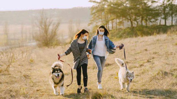 Salir con mascotas
