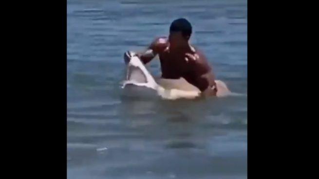 Twitter: Un hombre atrapa un tiburón con sus propias manos y lo saca del agua para hacerse fotos