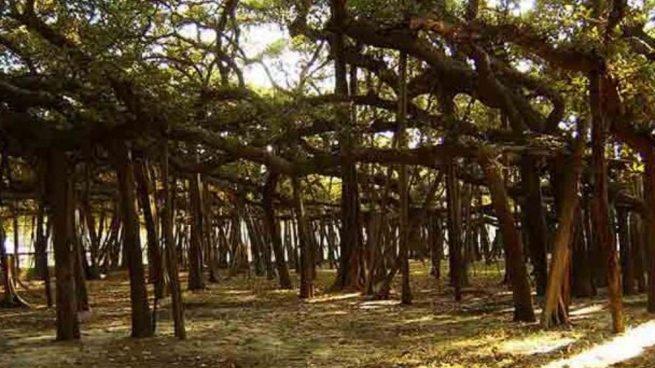 28 de junio: Día Mundial del Árbol