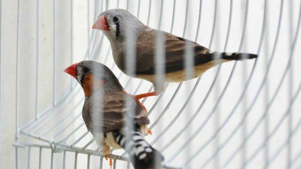 Pájaros en jaua