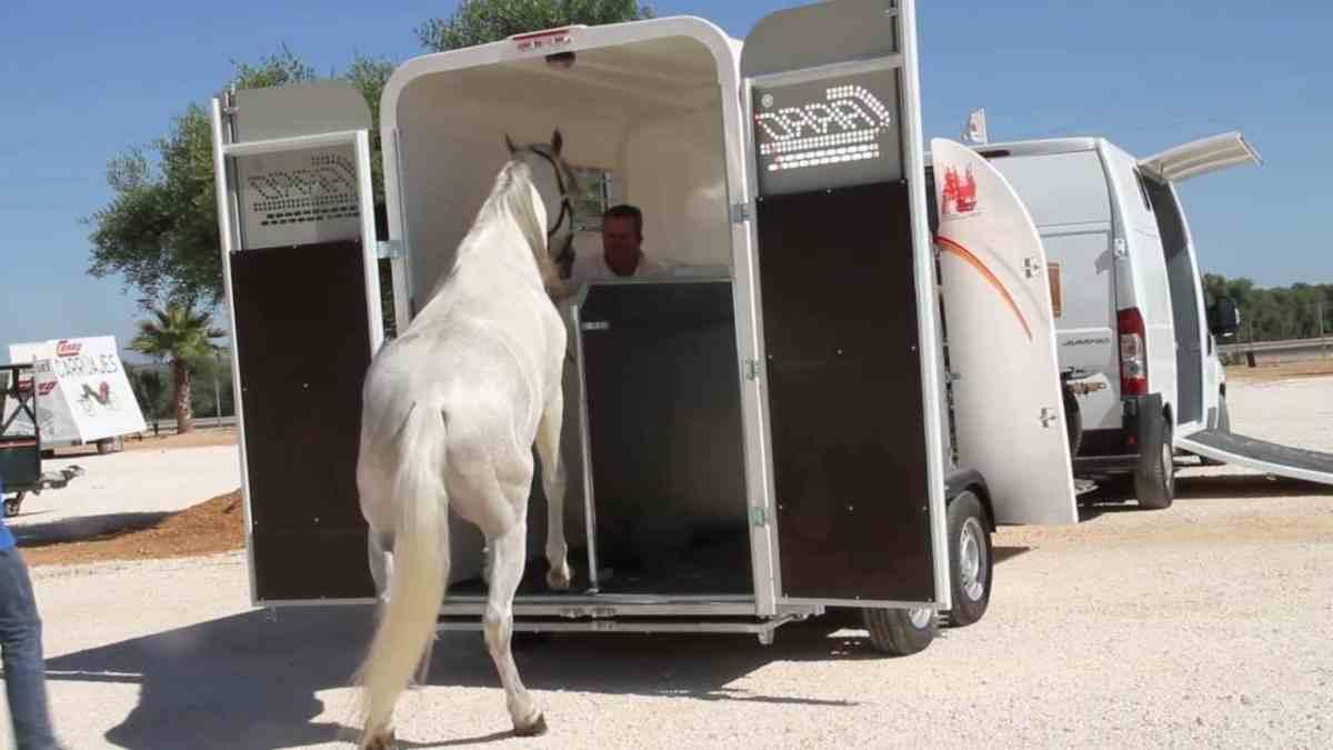 Cuidados al transportar caballos
