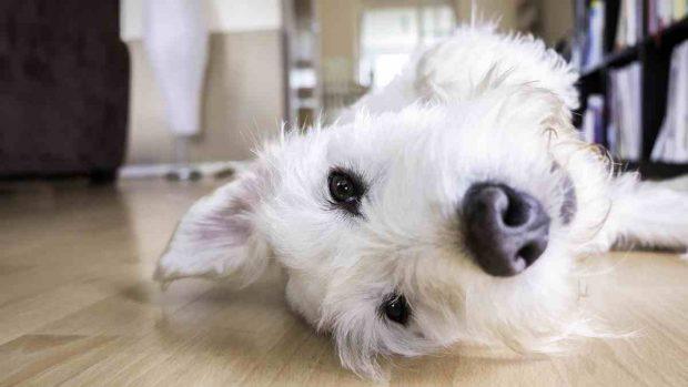 Castigo y refuerzo negativo en mascota