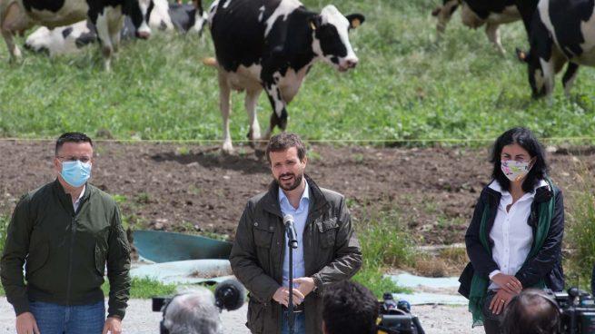 Pablo Casado en Galicia (Foto: EP)