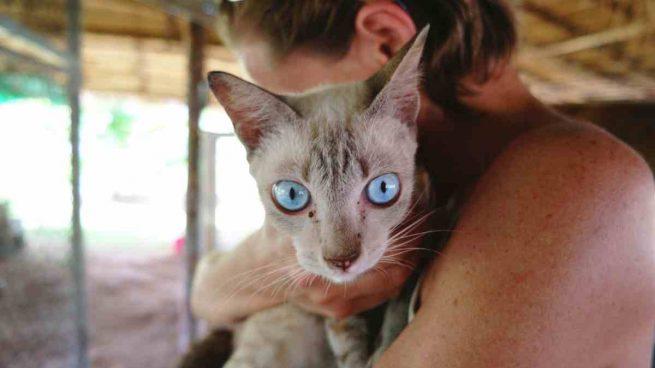 Gato con enfermedades virales
