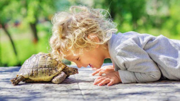 Cómo preparar a los niños para la llegada de una mascota