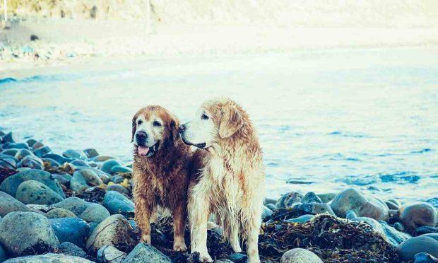 Elección pareja para perro