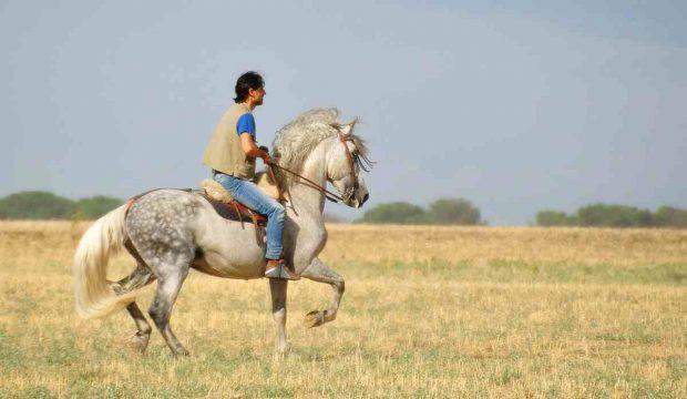 caballo emociones