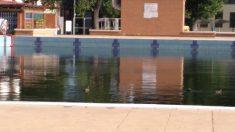 Los patos son los únicos que disfrutan de la principal piscina municipal.