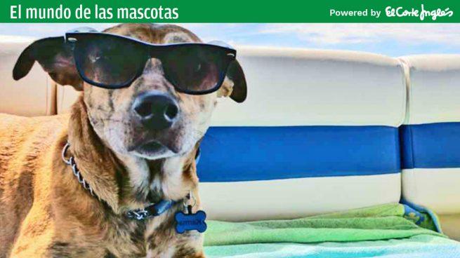 Accesorios para viajar con mascotas