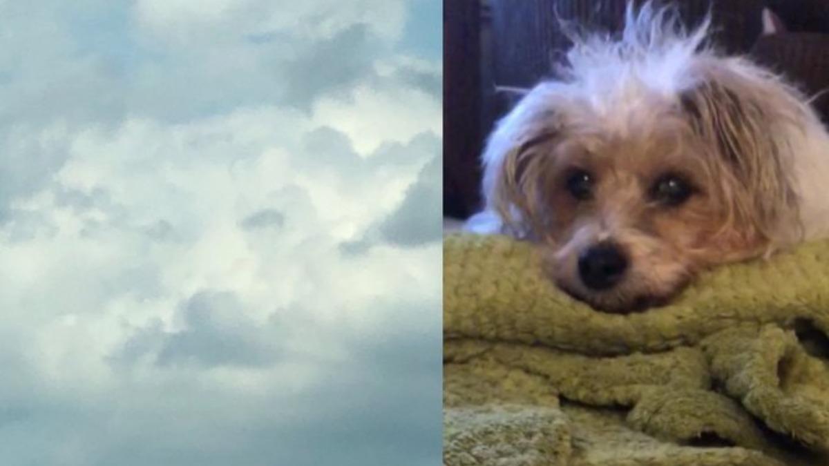 Twitter: Ve en el cielo el rostro de su perrita Sunny fallecida ese mismo día