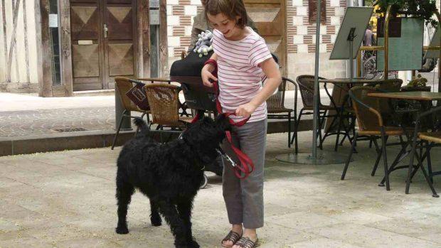Perro y adolescente