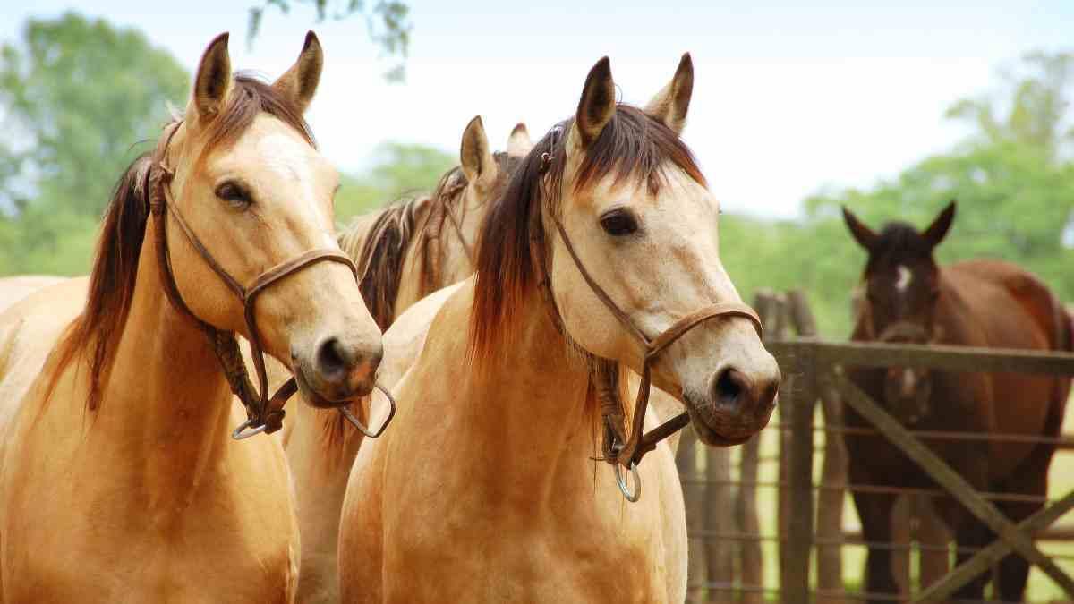 Cualidades de los caballos españoles