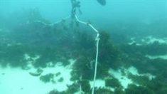 Ecologistas denuncian la pesca con redes de enmalle de deriva.