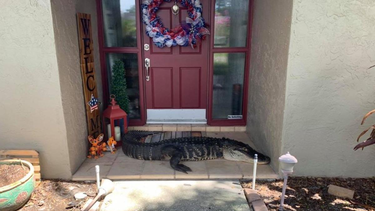 Facebook: Una familia se encuentra en la puerta de su casa con un cocodrilo de 3 metros