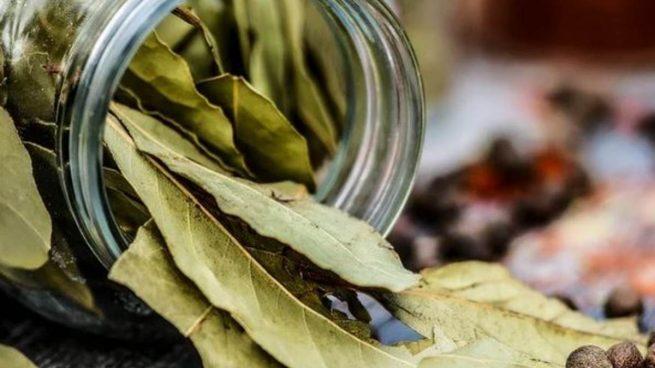 ¿Cuáles son los usos del laurel?