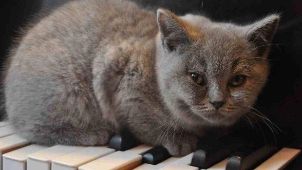 Gato en piano