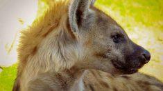 Consejos ante un animal salvaje herido