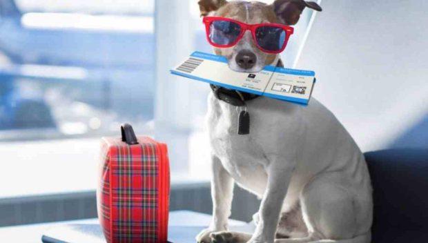 Viajes con perro