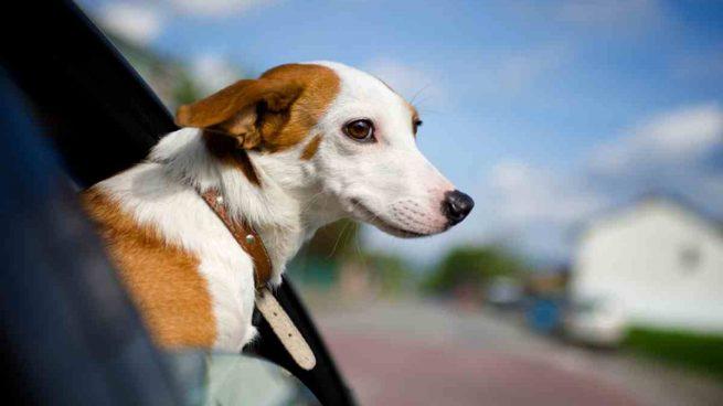 Viajes con tu perro