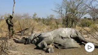 elefantes-muertos