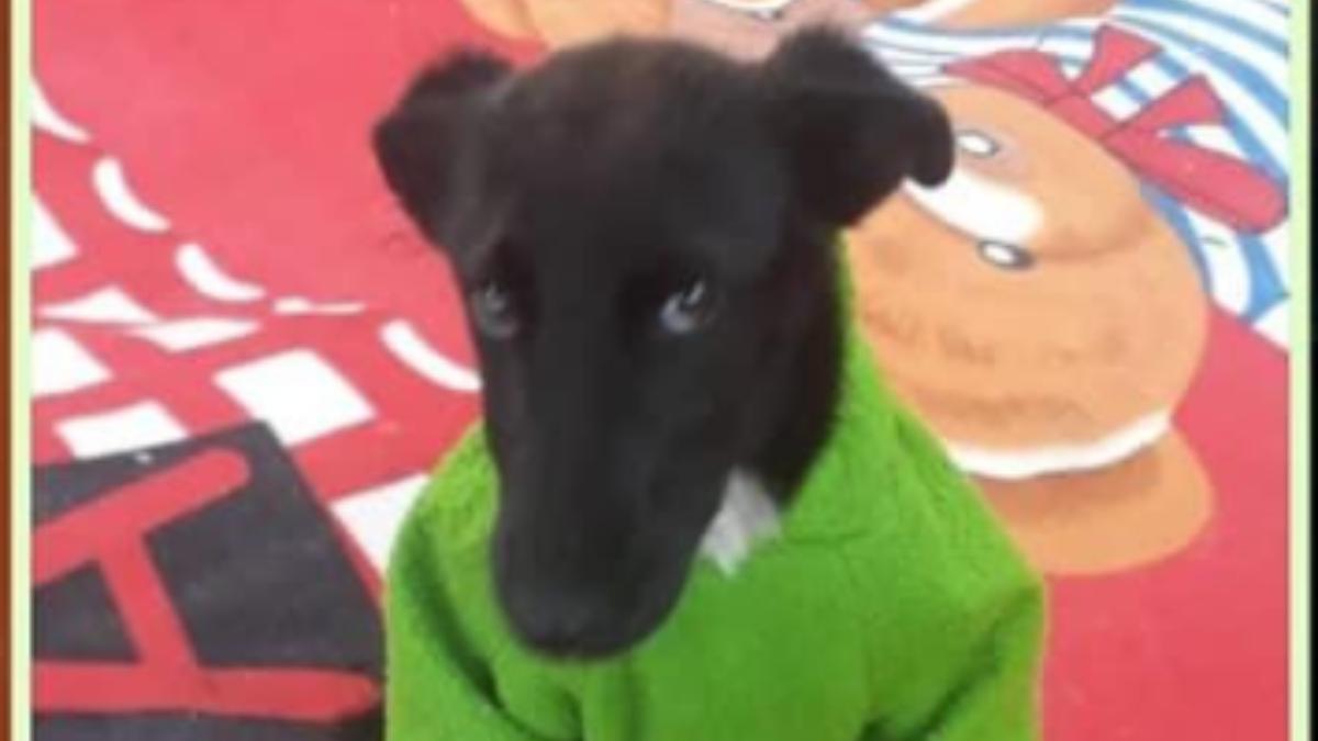 Twitter: Tabata es una perrita rechazada tres veces por ser negra