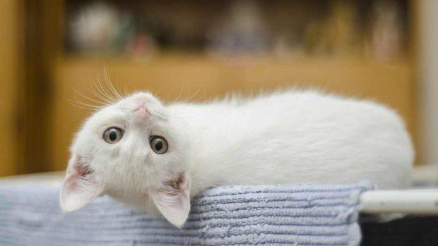 El gato y su territorio