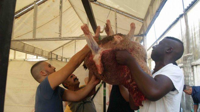 Los musulmanes de Ceuta celebran su Pascua con el sacrificio de corderos.