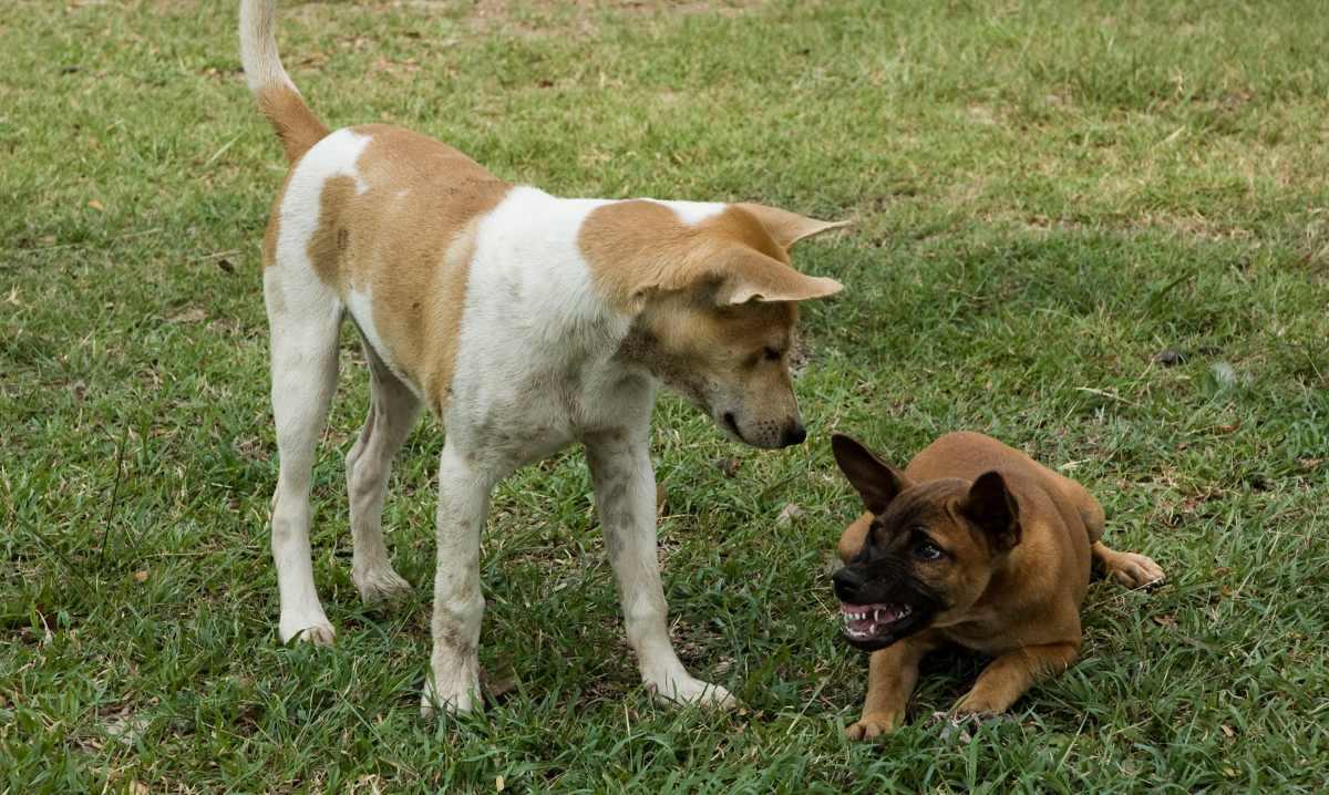Comportamiento territorial mascota