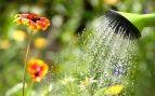 3 soluciones caseras para regar las plantas cuando te vas de vacaciones