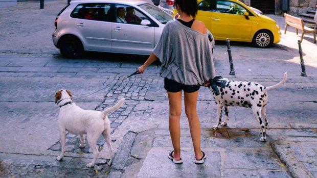 Cuidados del paseo de tu perro