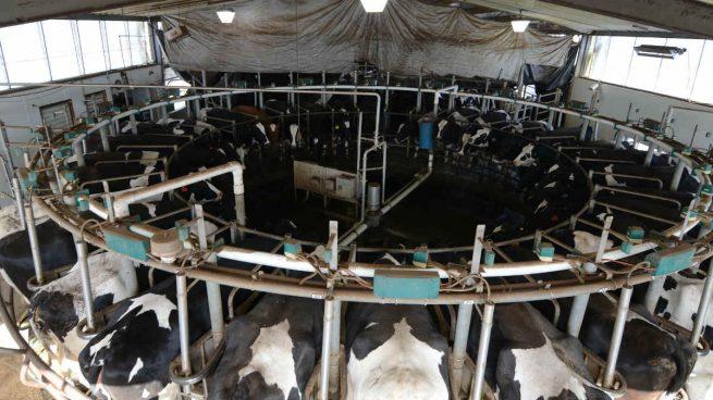 Nestlé, Pascual o Danone se preparan para reclamaciones de hasta 1.000 millones por el cártel lácteo