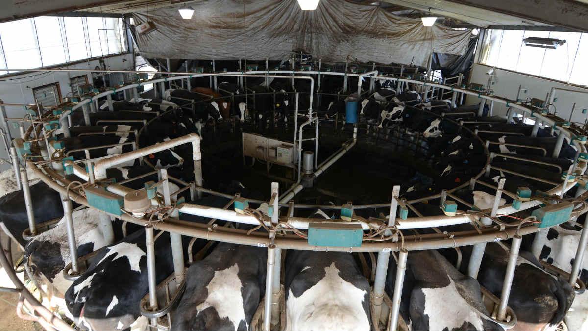 Granja de vacas lecheras