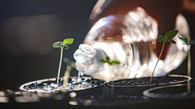trucos para plantas