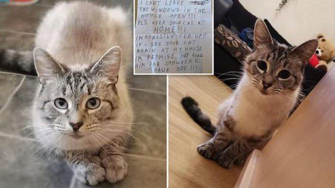 Twitter: Un gato regresa a casa con una nota en la que amenazan con secuestrarle