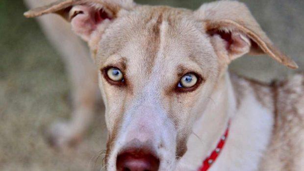 Problemas en los ojos del perro