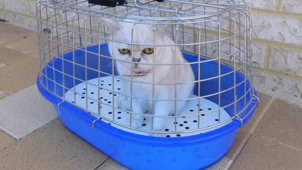 Gato, ir al veterinario