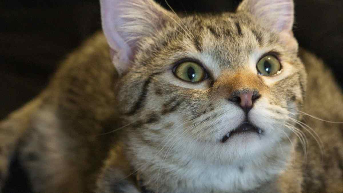 Gatos inteligentes, datos curiosos