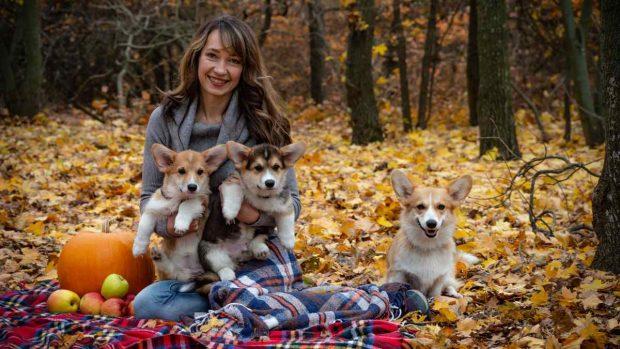 Perros en el bosque